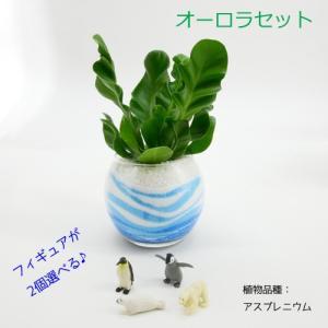 フィギュアが選べる♪ カラーサンド植え 水さし付【オーロラセット】 観葉植物/ハイドロカルチャー/水耕栽培/インテリアグリーン|julli