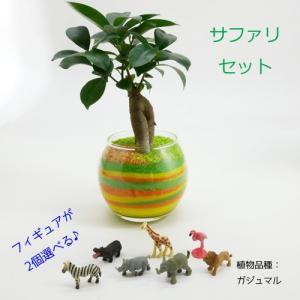 フィギュアが選べる♪ カラーサンド植え 水さし付【サファリセット】 観葉植物/ハイドロカルチャー/水耕栽培/インテリアグリーン|julli
