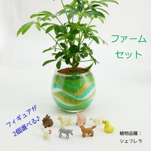フィギュアが選べる♪ カラーサンド植え 水さし付【ファームセット】 観葉植物/ハイドロカルチャー/水耕栽培/インテリアグリーン|julli