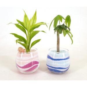 カラーサンド植え作成キット 初心者向け 顆粒タイプ 観葉植物/ハイドロカルチャー/水耕栽培/インテリアグリーン|julli