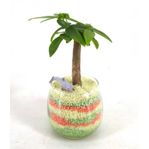 カラーサンド植え作成キット 観葉植物/ハイドロカルチャー/水耕栽培/インテリアグリーン|julli