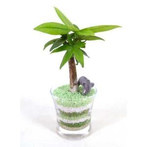 カラーサンド植え作成キット 3色セット 観葉植物/ハイドロカルチャー/水耕栽培/インテリアグリーン|julli