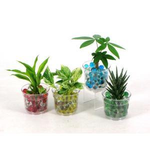 i−pot90 ビー玉植え 観葉植物/ハイドロカルチャー/水耕栽培/インテリアグリーン|julli