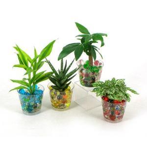 バード ビー玉植え 観葉植物/ハイドロカルチャー/水耕栽培/インテリアグリーン|julli