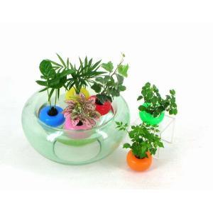 フローテ 観葉植物/ハイドロカルチャー/水耕栽培/インテリアグリーン|julli