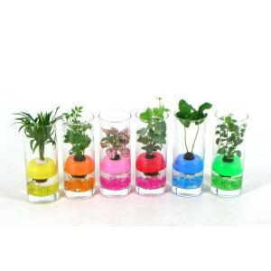 フローテ ボトル 観葉植物/ハイドロカルチャー/水耕栽培/インテリアグリーン|julli