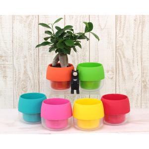 ハイミニビビの鉢 観葉植物/ハイドロカルチャー/...の商品画像