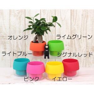 ハイミニビビの鉢 観葉植物/ハイドロカルチャー...の詳細画像1