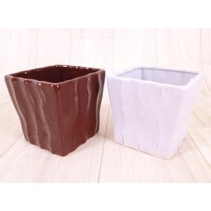 ハイミニリーガの鉢 3号苗 観葉植物/ハイドロカルチャー/水耕栽培/インテリアグリーン|julli