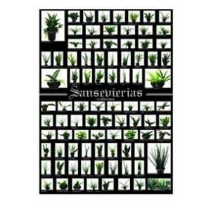 ポスター サンスベリア サンセベリア SANSEVIERIAS 観葉植物/ハイドロカルチャー/水耕栽培/インテリアグリーン|julli