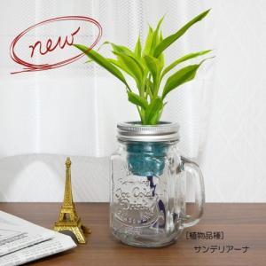 ウォータリウム ドリンクジャーM レインボーサンド植え 観葉植物/ハイドロカルチャー/水耕栽培/インテリアグリーン|julli
