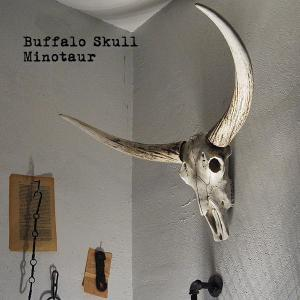 ポリレジンで忠実に再現した バッファローの頭蓋骨。  商品名となっている「ミノタウロス」とは、 牛の...