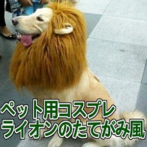 犬用 ライオン コスプレグッズ ペット用タオルセット 鬣 たてがみ ウィッグ おしゃれ コスチューム かわいい ワンちゃん|jxshoppu