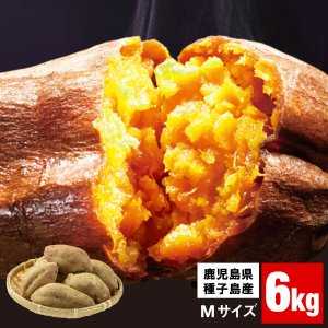 さつまいも 鹿児島県種子島産 安納芋 6kg 生芋 M・Lサイズ混載