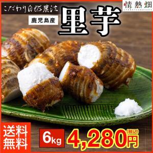里芋 品種:クロガラ 鹿児島県垂水産 6kg 送料無料 特別栽培 S〜Lサイズ jyonetsubatake