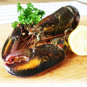 オマール海老のフルコース オマール海老(400〜450g)3尾 オマール海老味噌(200g) オマール海老のスープ(500g) jyuumonjiya