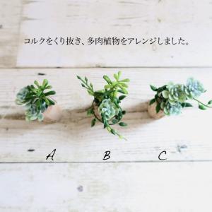 ミニ 観葉植物 造花 フェイク グリーン 多肉植物 コルクマグネット×1個 寄せ植え風 アレンジ インテリア リアル 消臭|k-hana|02