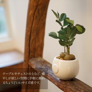 フェイクグリーン 人工観葉植物 造花 ガジュマ...の詳細画像3