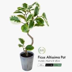フェイクグリーン ミニ 人工観葉植物 造花 フィカスアルテシマポット 44cm 鉢植 セメント鉢 光...