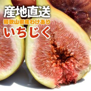 訳あり ご家庭用 フルーツ王国 和歌山県産 産地直送 いちじく 3.2kg 送料無料 k-yorozuya