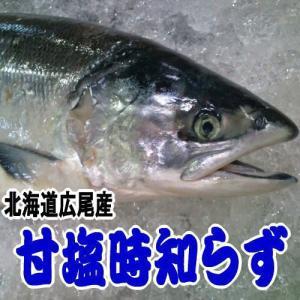 時しらず 甘塩 特大サイズ 1尾約2.5kg前後 北海道広尾産|kabusui