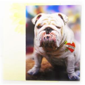 母の日カードL THE ブルドッグ[AVANTI]メッセージ・ギフトカード・グリーティング kaderia