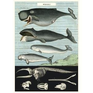 Cavallini&Co 包装紙 ラッピングペーパー クジラ ポスター輸入包装紙スクラップブッキング...