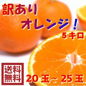 訳ありオレンジ 5キロ(20〜25玉)