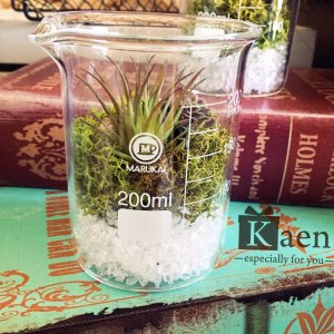 リビングや書斎に!置くだけインテリア多肉植物寄せ植えビーカー(フェイクグリーン)|kaen