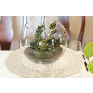 テラリウム ボウエレニグラマルガ花、ガーデニング 観葉植物 (44700)|kagoen-nursery