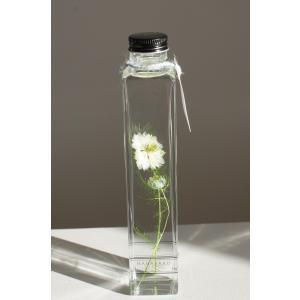 花咲くハ―バリウム ニゲラ |kagoen-nursery