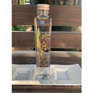 花咲くハ―バリウム エンシクリア Encyclia|kagoen-nursery