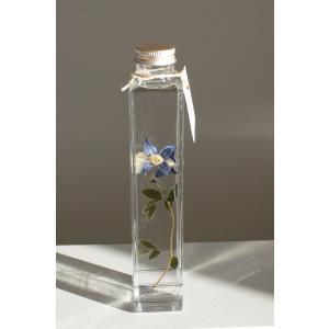 花咲くハ―バリウム  ファッシネーション 'Fascination'|kagoen-nursery