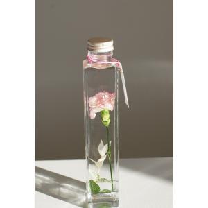 花咲くハ―バリウム カーネーションピコティ 花、ガーデニング ハーバリウム (44693)|kagoen-nursery