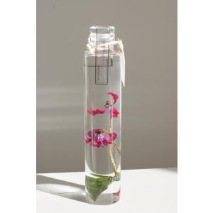 花咲くハ―バリウム シクラメン 天使の花 花、ガーデニング ハーバリウム (44693)|kagoen-nursery
