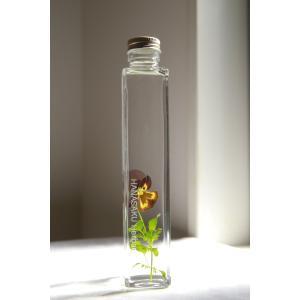 ビオラ 花咲くハーバリウム|kagoen-nursery