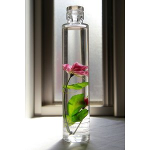 バラ 花咲くハーバリウム花、ガーデニング ハーバリウム (44693)|kagoen-nursery