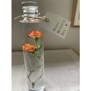 カーネーション「カリンボ」 花咲くハーバリウム花、ガーデニング ハーバリウム (44693)|kagoen-nursery