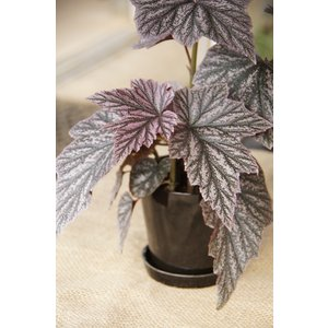 陶器鉢 タリーズ ラウンド ノアール 花、ガーデニング 園芸用品 鉢 (4054)|kagoen-nursery