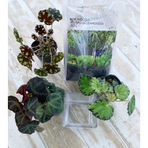 Cube ガラス 花、ガーデニング 園芸用品 鉢、プランター 鉢、プランターカバー (4054)|kagoen-nursery