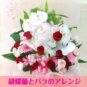 胡蝶蘭 フラワーアレンジメント 花 ギフト お祝い 開店祝い...