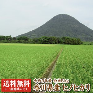 【29年産】香川県産ヒノヒカリ白米5kg 【ひのひかり】...