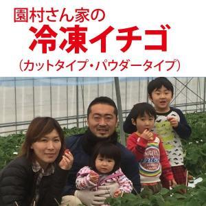 ひんやり広がるイチゴの香りと甘酸っぱさ! 熊本の園村さん家で採れたこだわりイチゴを 採れたての美味し...