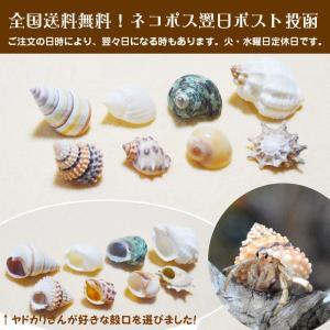 ヤドカリ引越用貝殻 SS-Sセット 10個セット|kaigaraya