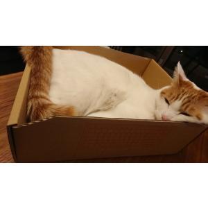 テレワーク支援! にゃんこボックス(BOX)|kaihatsushigyo