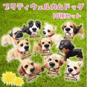 プリティウェルカムドッグS 10種アソート エイチツーオー|kaikai-shop