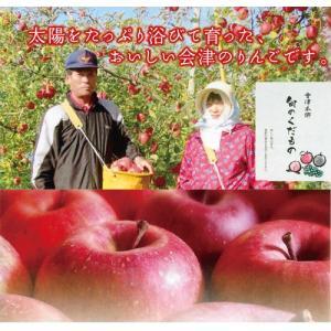 会津美里町産りんご サンふじ 3kg 8〜11玉 kaiseiya