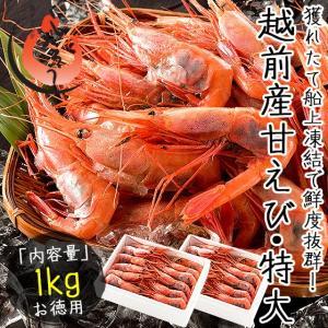 甘エビ 甘えび 子持ち 特大サイズ 1kg(500g×2箱) 約60尾入り 刺身用 越前産