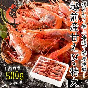 甘エビ 甘えび 子持ち 特大サイズ 500g(約30尾入り) 刺身用 越前産