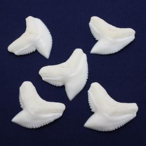 イタチザメの歯(LLサイズ) Tiger Shark tooth サメの歯1個 約3.0cmUP|kaiyokobo